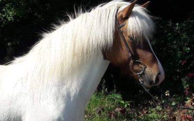Neue Verkaufspferde…